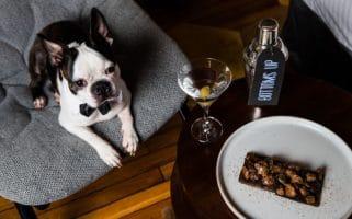 QT Hotels Dog Friendly
