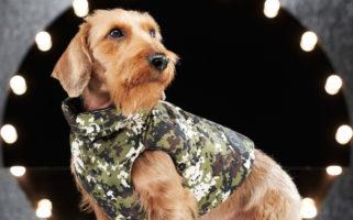 Moncler Dog Couture