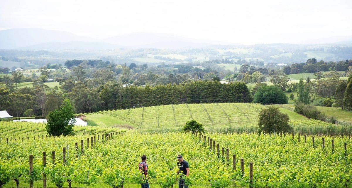 Behind the Vines