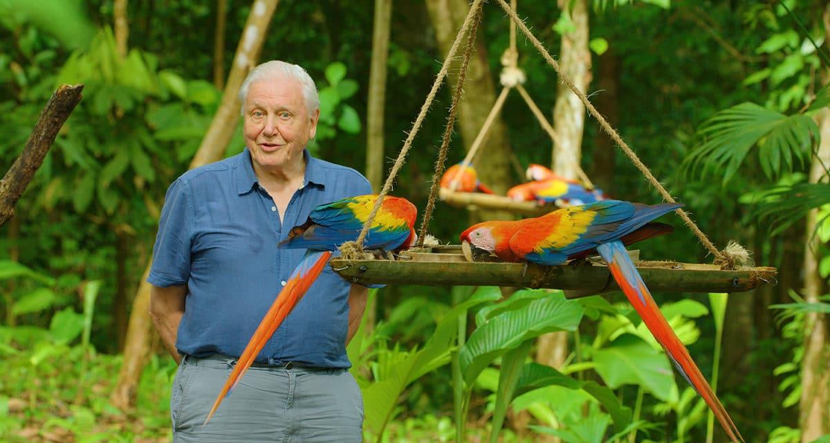 netflix life in colour sir david attenborough