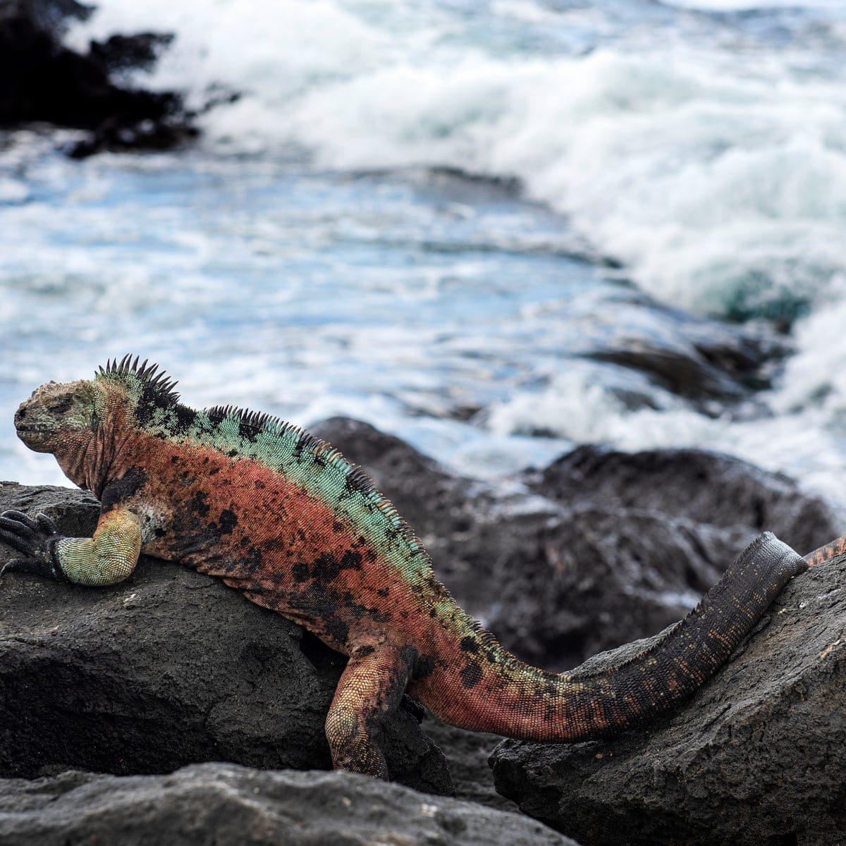 Leonardo DiCaprio Galapagos Islands re:wild pink iguana