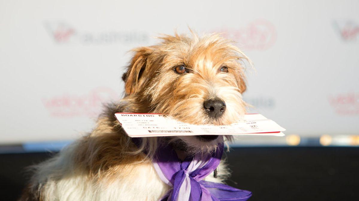 Fly With Dog Australia