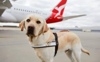 Fly With Dog Australia Qantas